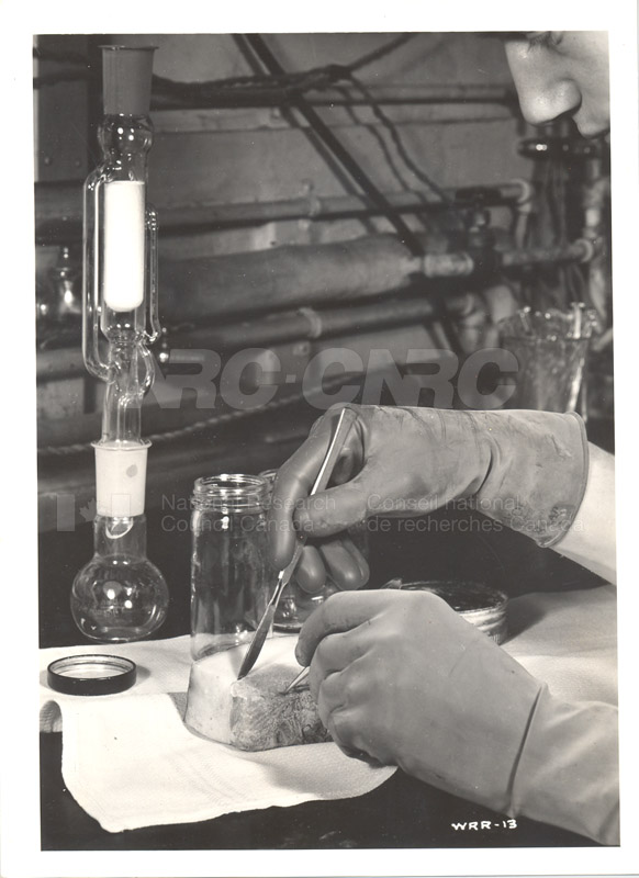 Food Biology- Meat Storage Investigation 001