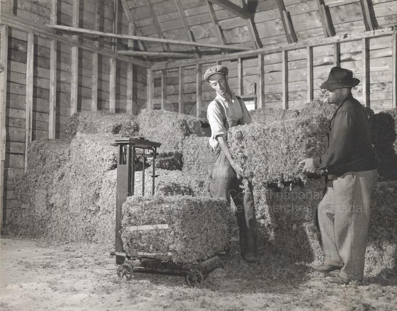 Carageen- 'Irish Moss', PEI c.1946 001