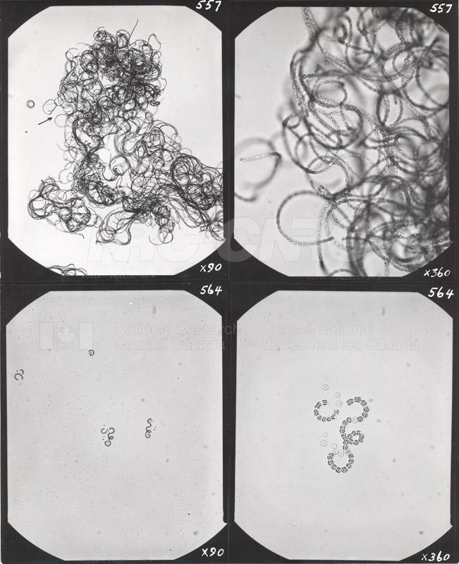 Microbiology 009