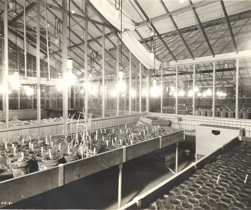 Agriculture and Biology- ''Greenhouses'' (KK-91)