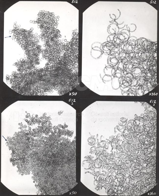 Microbiology 015