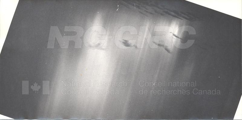 Aurora 009