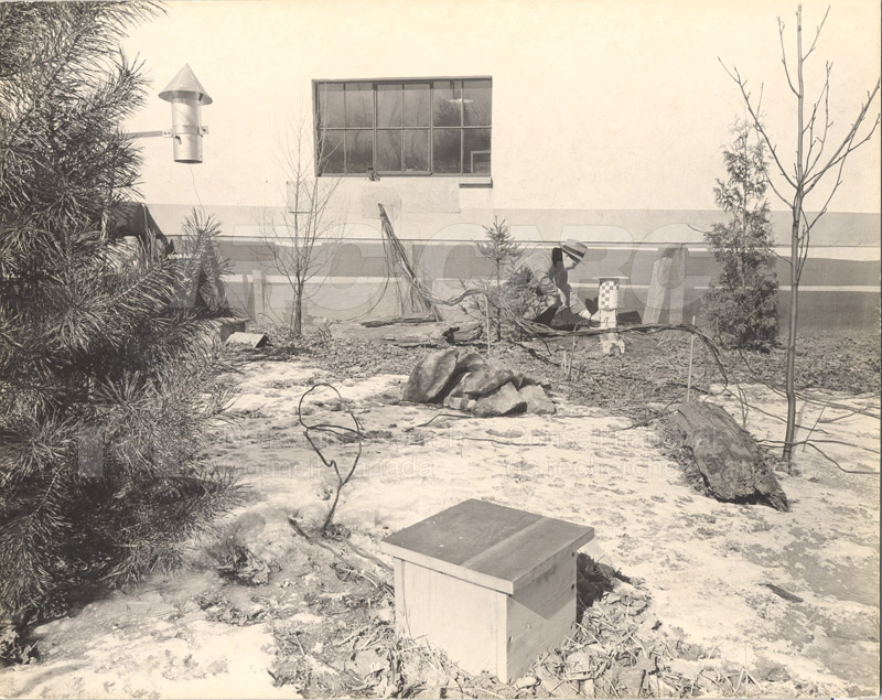 Animal Enclosures at Field Station- A. Templeton March 1953