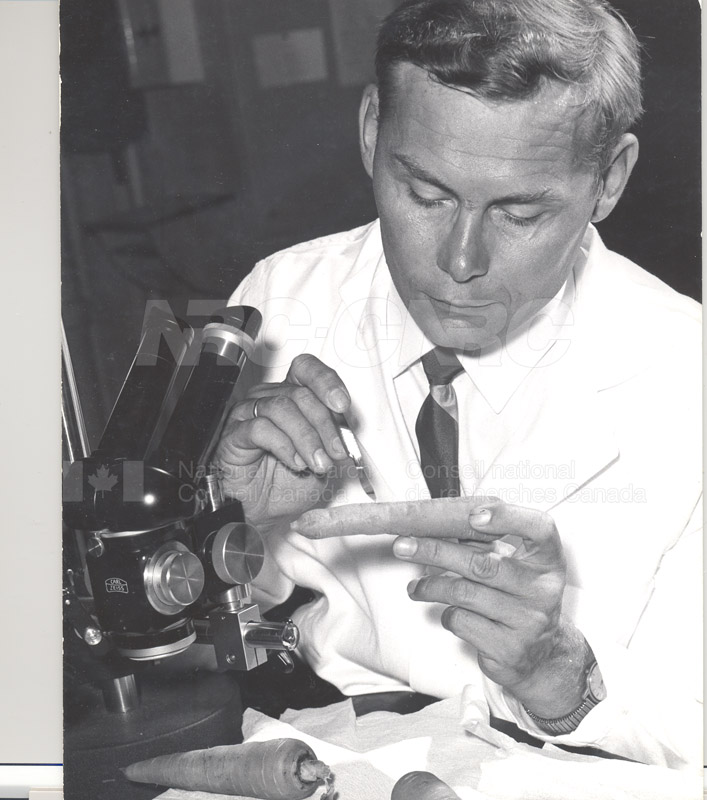 Biosciences Division- Experiments to Determine the Effect of High Humidity on the Storage Life of Carrots 1966 001