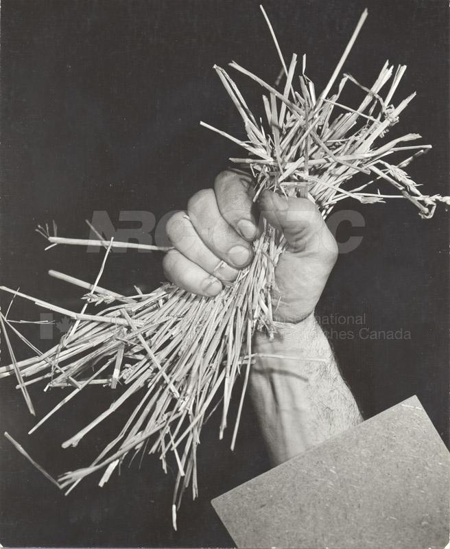 Fibre Board From Straw 1956