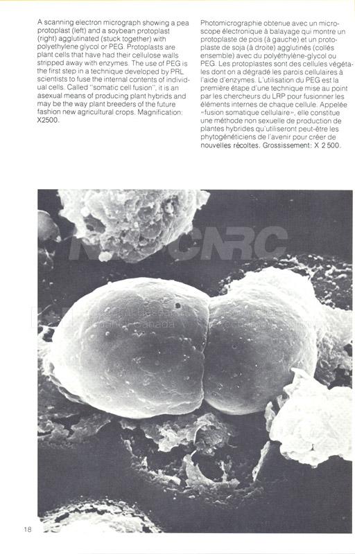 Brochure Biological Sciences 82-03-042