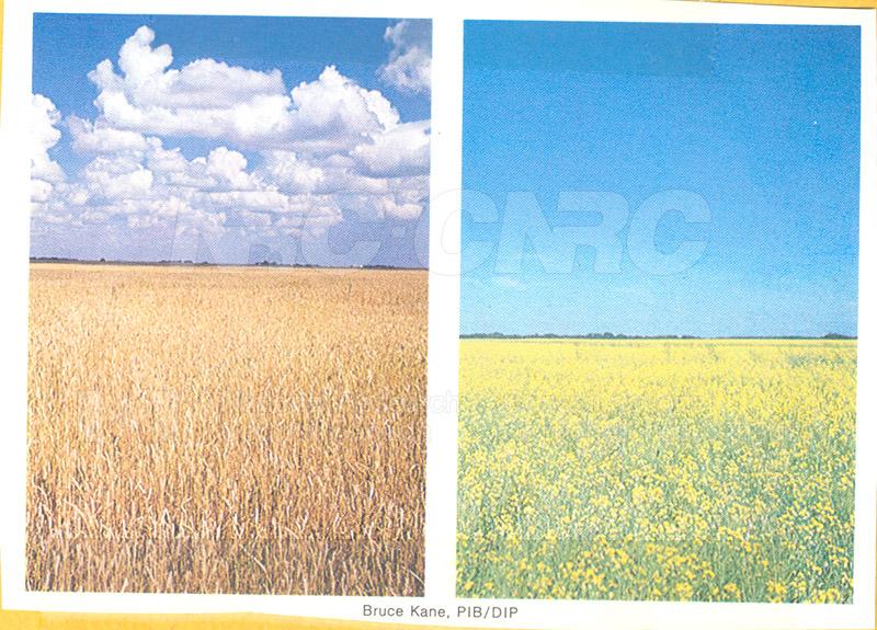 Brochure Biological Sciences 82-03-027