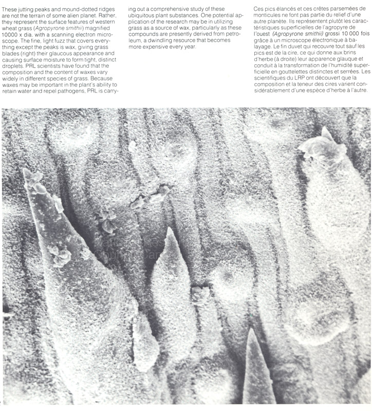 Brochure Biological Sciences 82-03-041