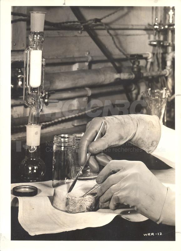 Food Biology- Meat Storage Investigation 002