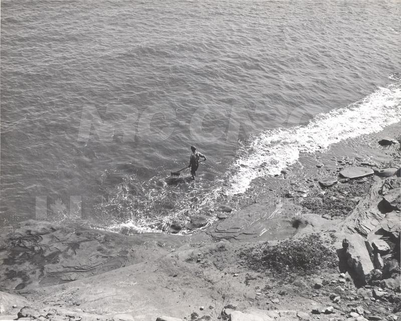 Carageen- 'Irish Moss', PEI c.1946 003
